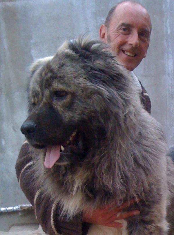 Bassa, a female Caucasian Shepherd bred at Tabakini Monastery